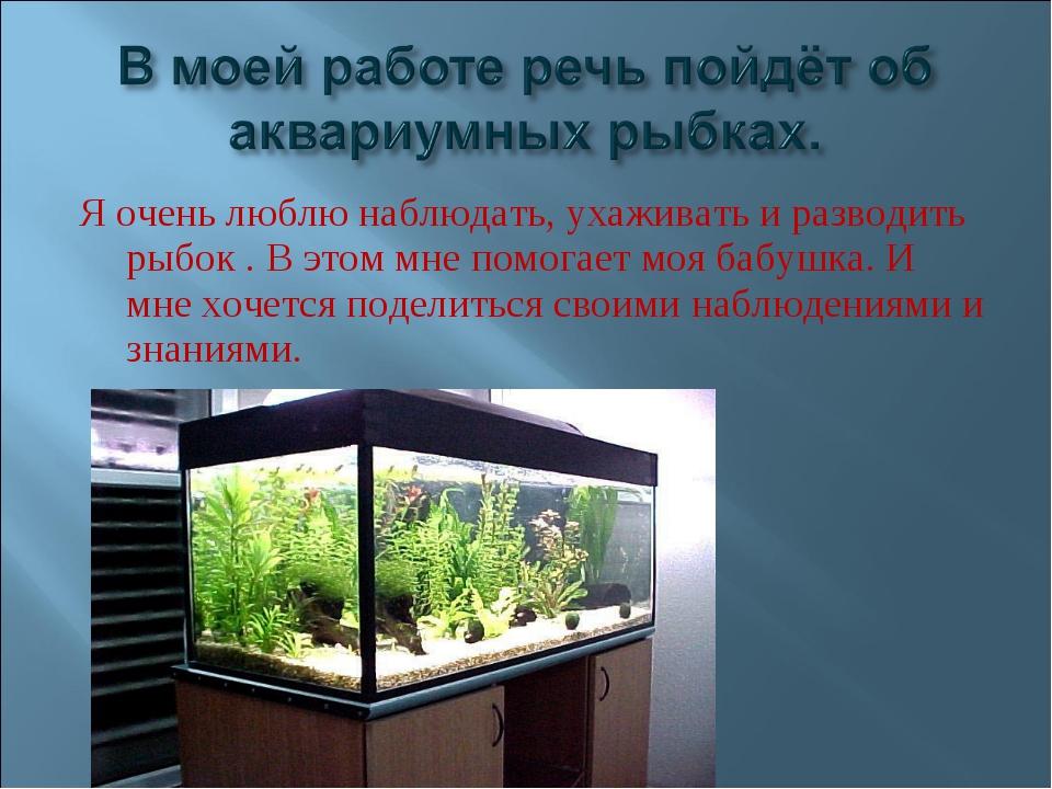 Я очень люблю наблюдать, ухаживать и разводить рыбок . В этом мне помогает мо...