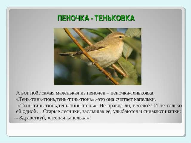 ПЕНОЧКА - ТЕНЬКОВКА А вот поёт самая маленькая из пеночек – пеночка-теньковк...