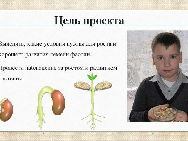 Подумай почему первым из семени вырастает корень