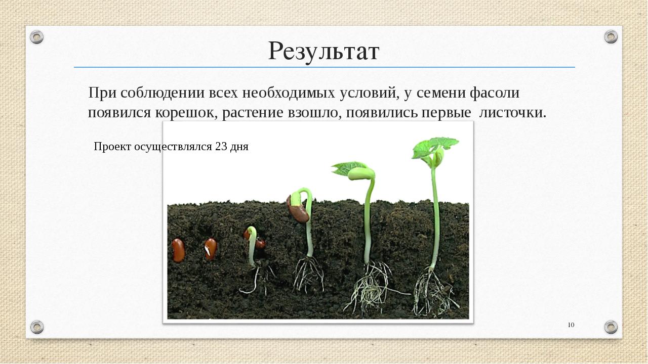 исследовательская работа условия прорастания семян