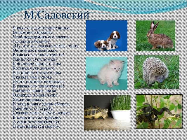 М.Садовский Я как-то в дом принёс щенка Бездомного бродягу, Чтоб подкормить е...