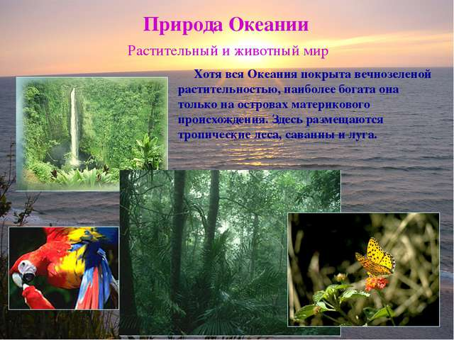 Природа Океании Растительный и животный мир Хотя вся Океания покрыта вечнозел...