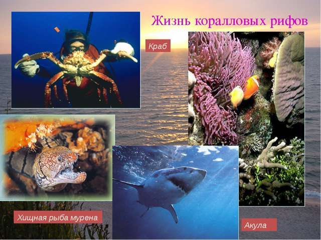 Хищная рыба мурена Жизнь коралловых рифов Акула Краб