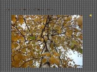 Раскидал осенний лес рубли целковые…