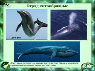 Живут в воде, размеры тела крупные или гигантские. Передние конечности видоиз