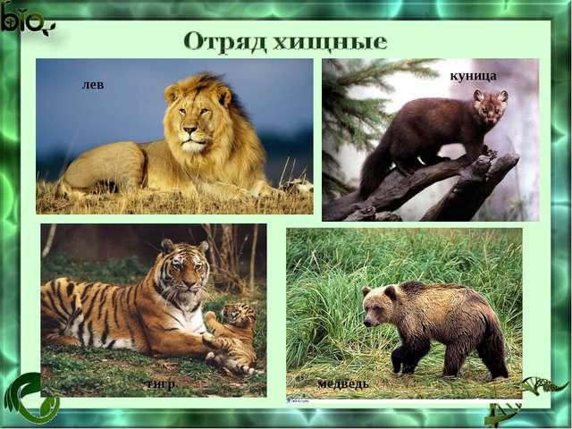 лев куница тигр медведь