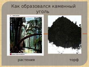 растения торф Как образовался каменный уголь