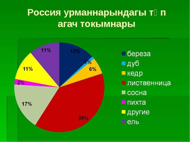 Россия урманнарындагы төп агач токымнары