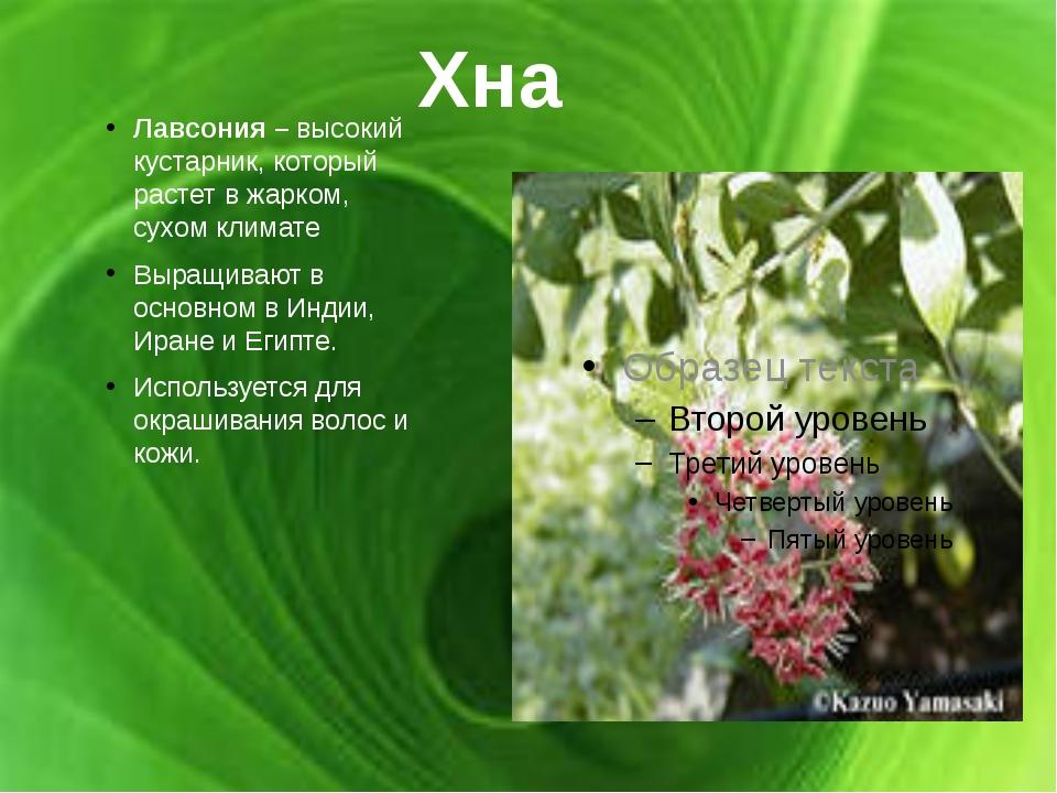 Хна Лавсония – высокий кустарник, который растет в жарком, сухом климате Выра...