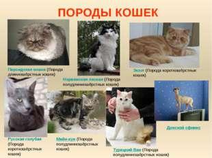 ПОРОДЫ КОШЕК Персидская кошка (Порода длинношёрстных кошек) Турецкий Ван (Пор