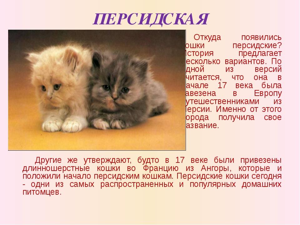ПЕРСИДСКАЯ Откуда появились кошки персидские? История предлагает несколько ва...