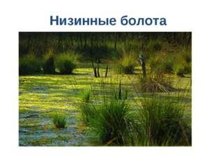 Низинные болота