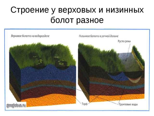 Строение у верховых и низинных болот разное