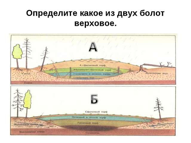 Определите какое из двух болот верховое.