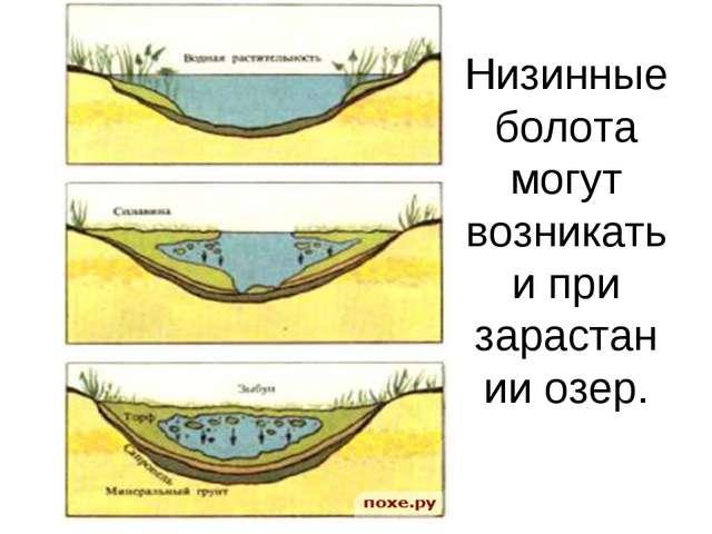 Низинные болота могут возникать и при зарастании озер.