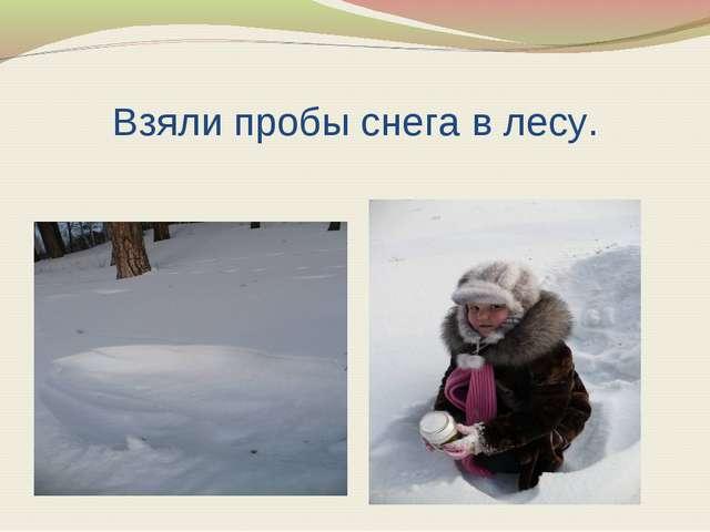 Взяли пробы снега в лесу.