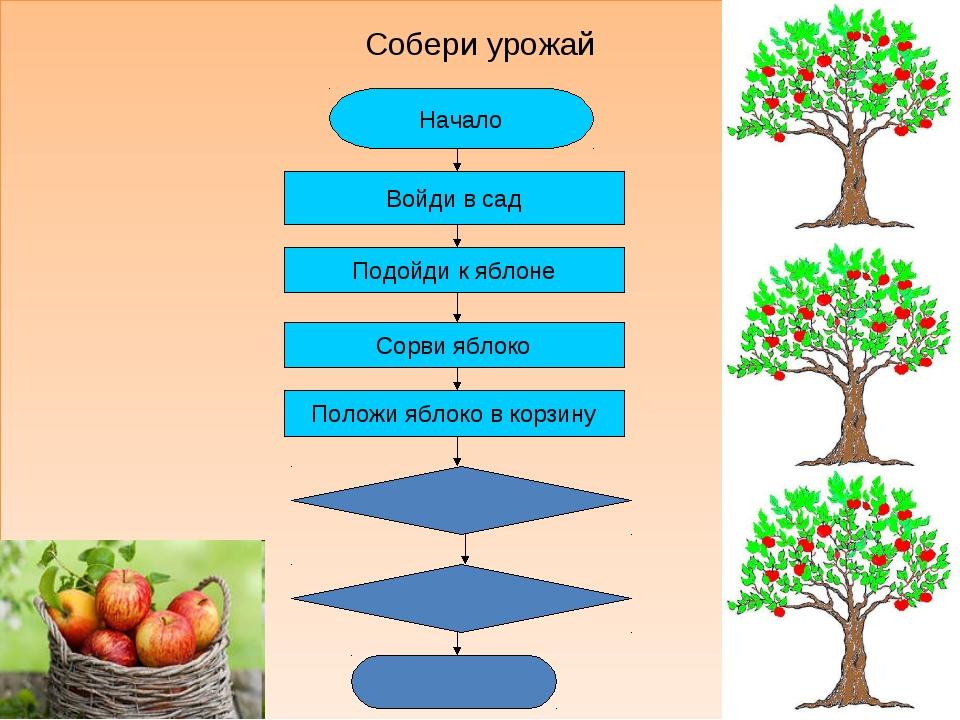Собери урожай * Начало Войди в сад Подойди к яблоне Сорви яблоко Положи яблок...