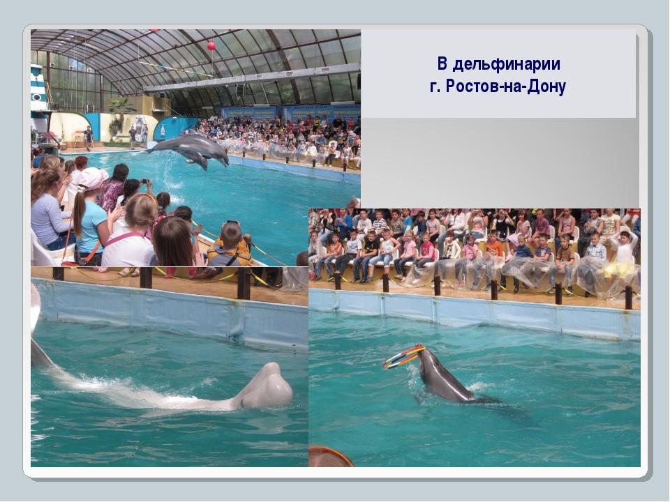 В дельфинарии г. Ростов-на-Дону