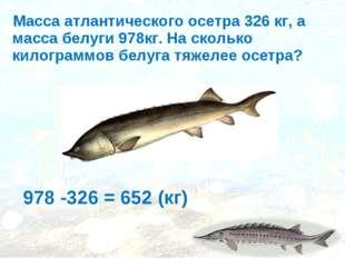 Масса атлантического осетра 326 кг, а масса белуги 978кг. На сколько килогра