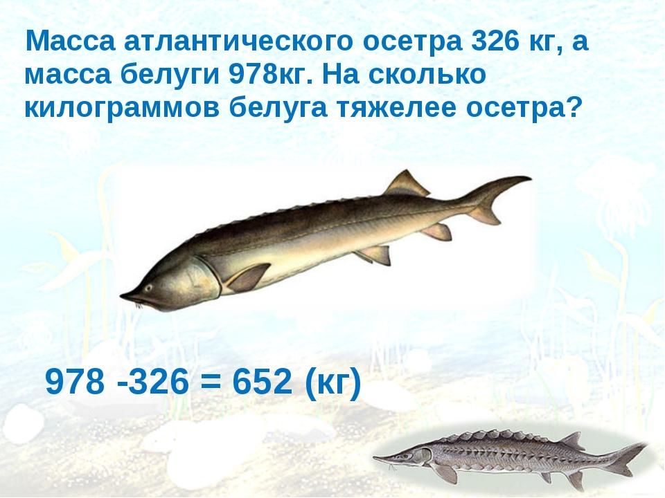 Масса атлантического осетра 326 кг, а масса белуги 978кг. На сколько килогра...