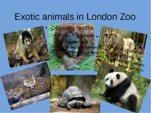 Exotic animals in London Zoo