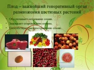 Плод – важнейший генеративный орган размножения цветковых растений Обеспечива