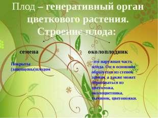Плод – генеративный орган цветкового растения. Строение плода: семена околопл