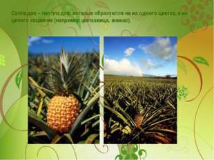 Соплодие – тип плодов, которые образуются не из одного цветка, а из целого со
