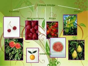 Сочные плоды Костянка Многокостянка Ягода Яблоко померанец