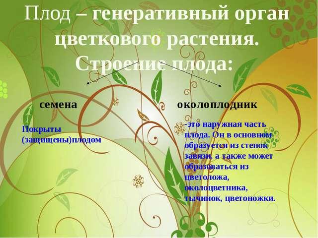 Плод – генеративный орган цветкового растения. Строение плода: семена околопл...