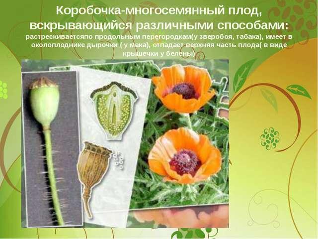 Коробочка-многосемянный плод, вскрывающийся различными способами: растрескива...