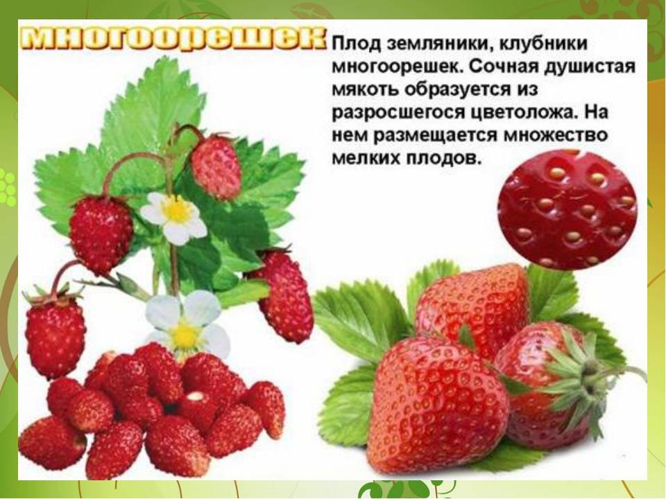 Favorites Add как узнать плод клубники дело