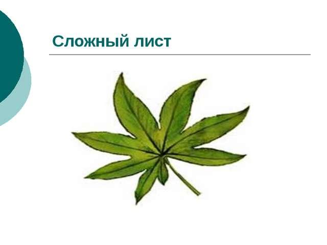 Сложный лист