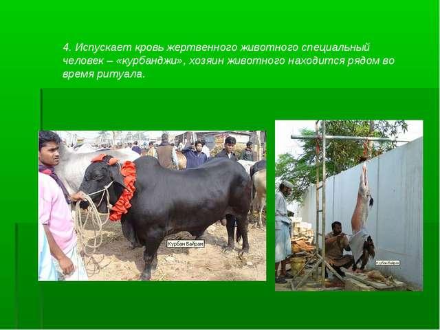 4. Испускает кровь жертвенного животного специальный человек – «курбанджи», х...
