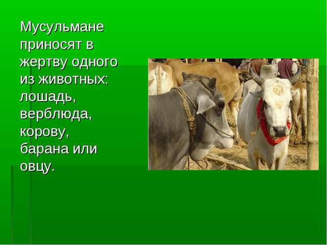 Мусульмане приносят в жертву одного из животных: лошадь, верблюда, корову, ба...