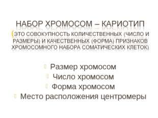 Размер хромосом Число хромосом Форма хромосом Место расположения центромеры