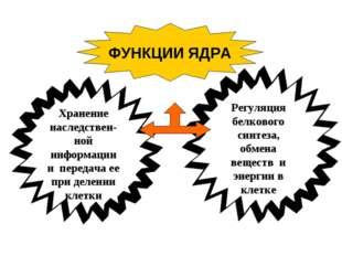 ФУНКЦИИ ЯДРА Хранение наследствен-ной информации и передача ее при делении кл