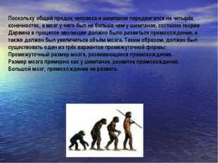 Поскольку общий предок человека и шимпанзе передвигался на четырёх конечностя