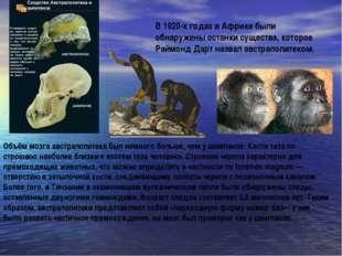 В 1920-х годах в Африке были обнаружены останки существа, которое Раймонд Дар