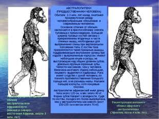 АВСТРАЛОПИТЕКИ (ПРЕДШЕСТВЕННИКИ ЧЕЛОВЕКА) Обитали 2-3 млн. лет назад. Анатоми