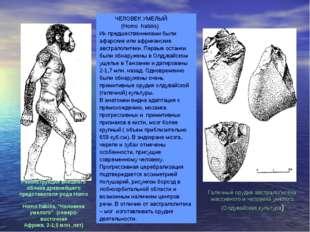 ЧЕЛОВЕК УМЕЛЫЙ (Homo habilis) Их предшественниками были афарские или африкан