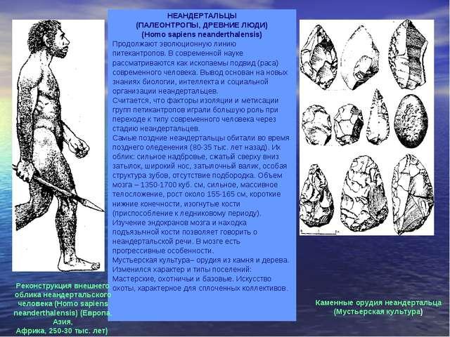 НЕАНДЕРТАЛЬЦЫ (ПАЛЕОНТРОПЫ, ДРЕВНИЕ ЛЮДИ) (Homo sapiens neanderthalensis) Про...