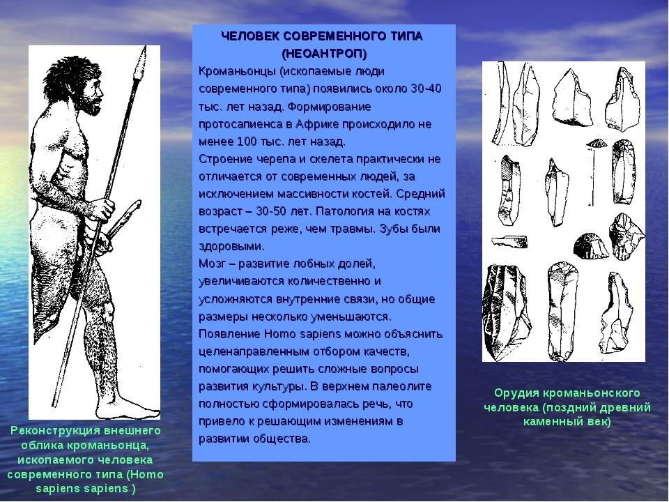 ЧЕЛОВЕК СОВРЕМЕННОГО ТИПА (НЕОАНТРОП) Кроманьонцы (ископаемые люди современно...