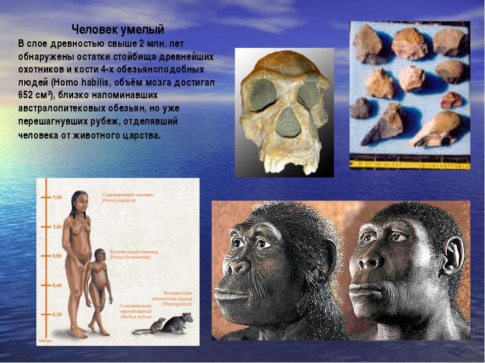 Человек умелый В слое древностью свыше 2 млн. лет обнаружены остатки стойбища...