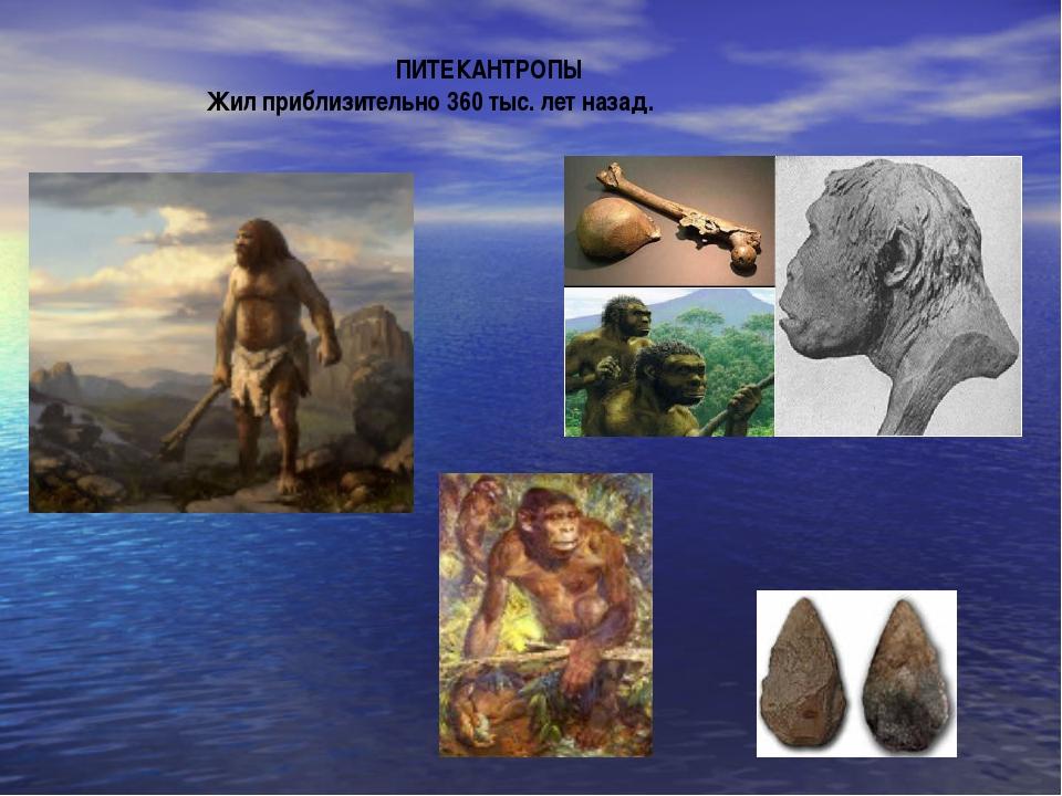 ПИТЕКАНТРОПЫ Жил приблизительно 360 тыс. лет назад.