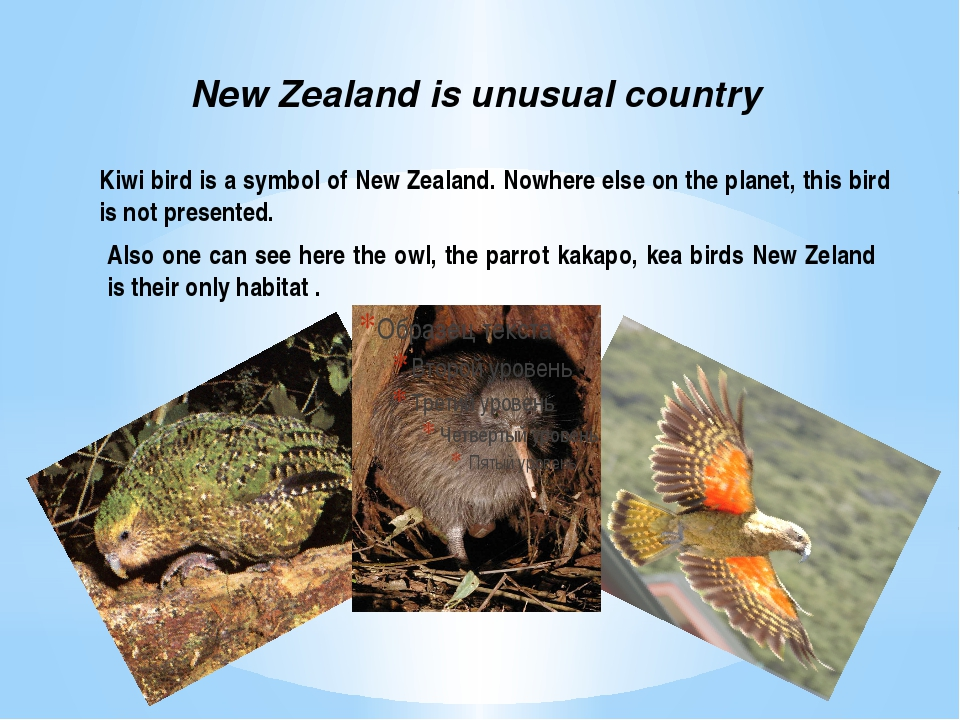 One of the main characteristical features of New Zealand is its carefully pre...
