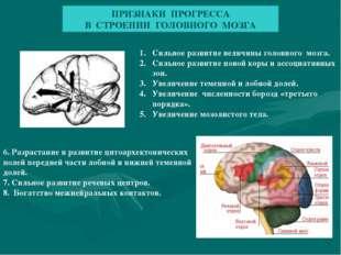 ПРИЗНАКИ ПРОГРЕССА В СТРОЕНИИ ГОЛОВНОГО МОЗГА Сильное развитие величины голов