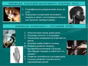 ПРИЗНАКИ РЕДУКЦИИ ВОЛОСЯНОГО ПОКРОВА ТЕЛА Специфическое распределение волос н