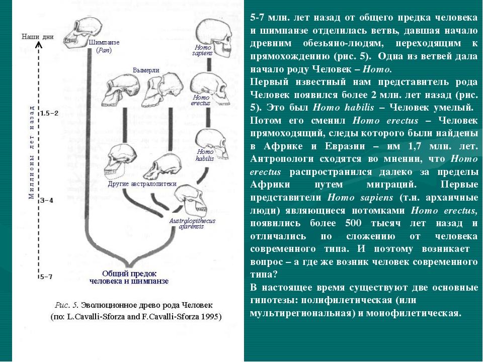 5-7 млн. лет назад от общего предка человека и шимпанзе отделилась ветвь, дав...