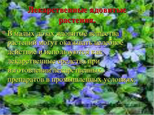 Лекарственные ядовитые растения. В малых дозах ядовитые вещества растений мог...